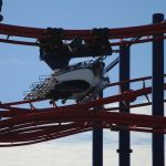 Coney Island - Soarin Eagle - 004