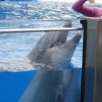 Sea World Orlando - Horizon - 003