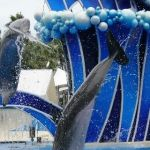 Sea World Orlando - Horizon - 007