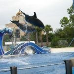 Sea World Orlando - Horizon - 027