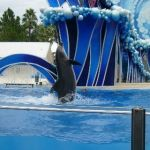 Sea World Orlando - Horizon - 028