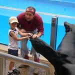 Sea World Orlando - Seeloewe - 009