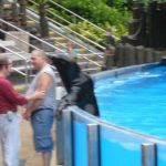 Sea World Orlando - Seeloewe - 015