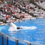 Sea World Orlando - Shamu - 005
