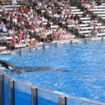 Sea World Orlando - Shamu - 010