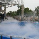 Sea World Orlando - Shamu - 015