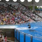 Sea World Orlando - Shamu - 026