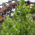 Six Flags Fiesta Texas - Iron Rattler - 046